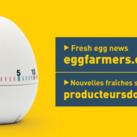 Positioning EggFarmers.ca as the Go-To Source for Egg Industry News