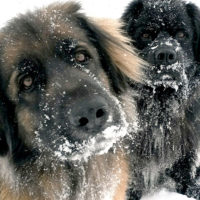Help Feed Ottawa's Furry Bellies this Giving Season